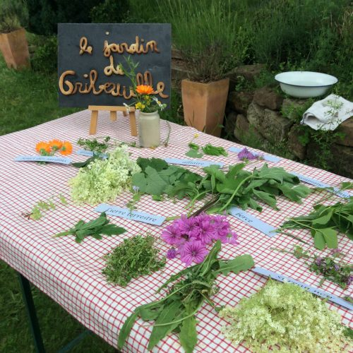 Le jardin de Gribouille - plantes récoltées